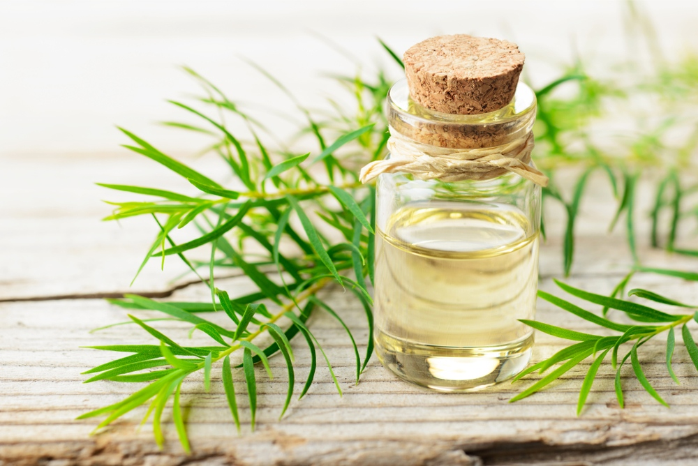 what is tea tree oil for hair